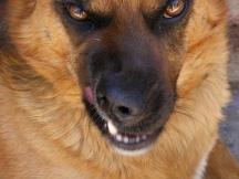 Dog Eat Dog World of Competition